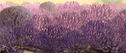 Rugosa land coral