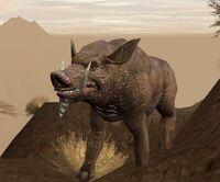 Bladeback boar