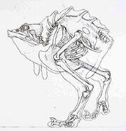 Nuna Skeleton.jpg