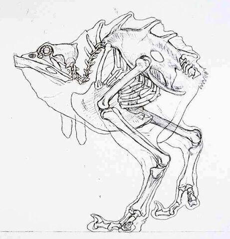 Soubor:Nuna Skeleton.jpg
