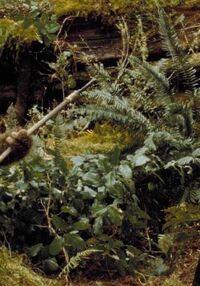 Endor plants.jpg
