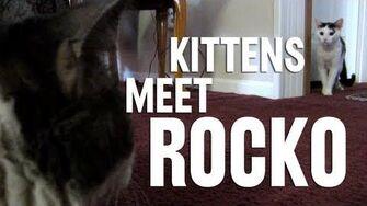 Kittens Meet Rocko! (Day 1126 - 12 24 12)-0