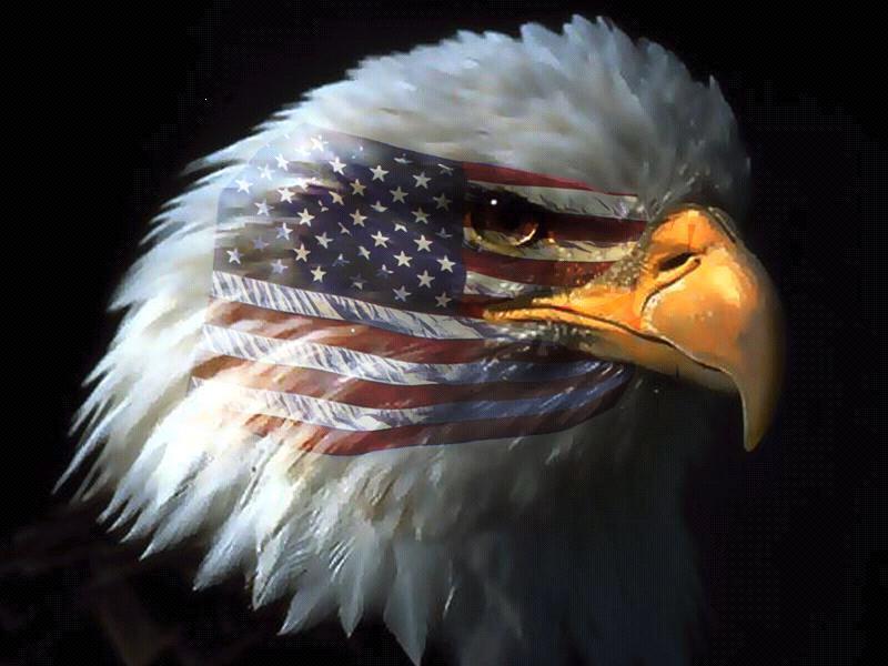 Resultado de imagem para pictures of American eagle