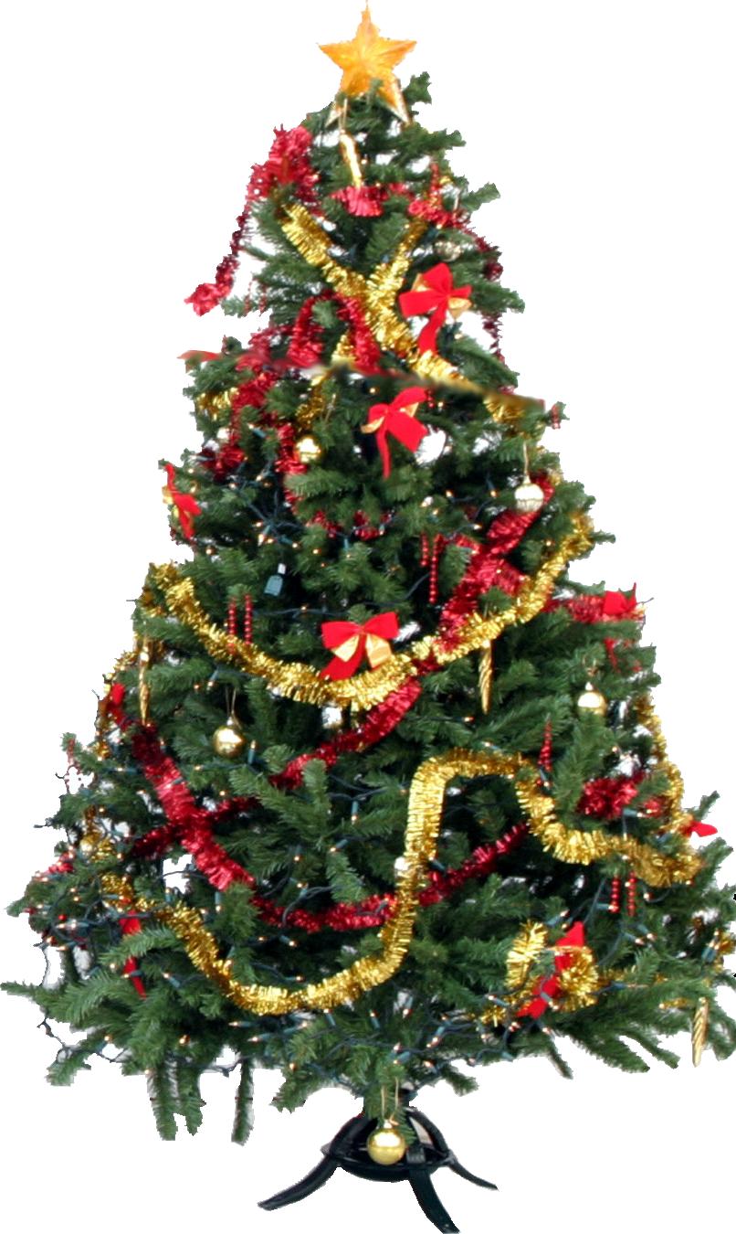 Maine Christmas Trees