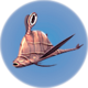 Cured Garryfish