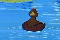 Duck DPW