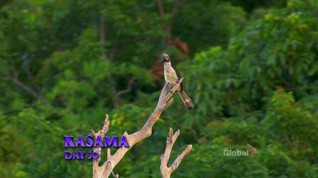 File:Survivor.s27e12.hdtv.x264-2hd 047.jpg