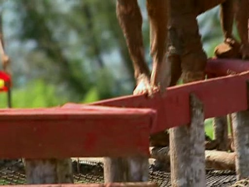 File:Survivor.Vanuatu.s09e01.They.Came.at.Us.With.Spears.DVDrip 353.jpg