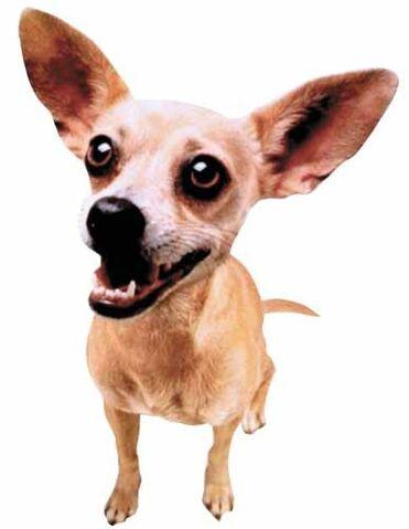 File:Taco-bell-dog.jpg
