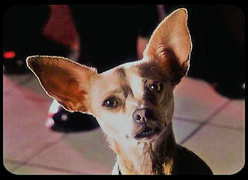 File:Taco Bell Chihuahua.png