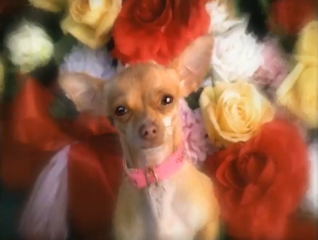 File:Taco bell dog's girlfriend.png