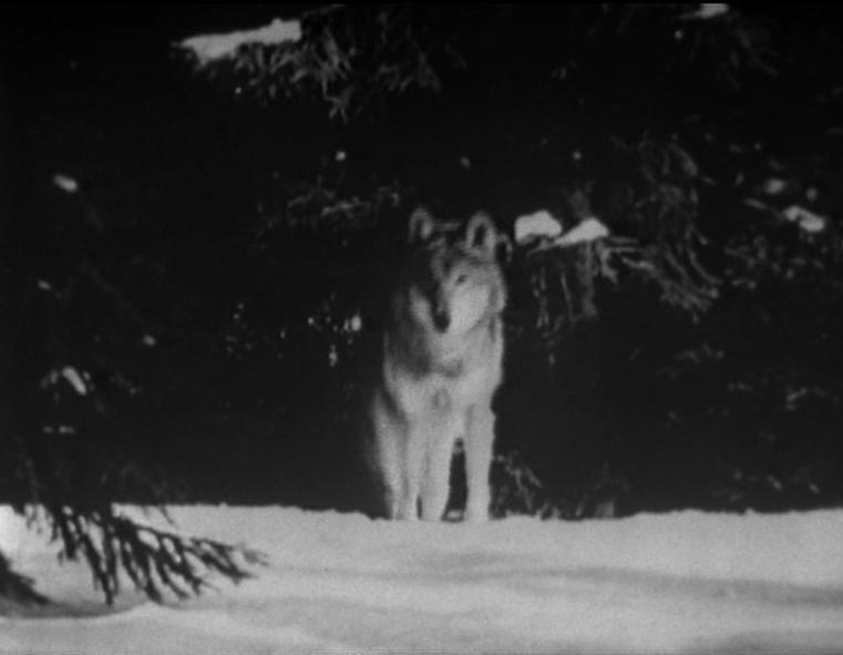 Marinus Wolf
