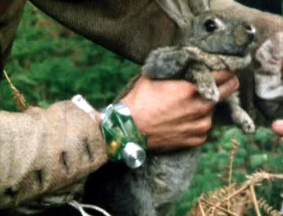 File:Rabbit.jpg