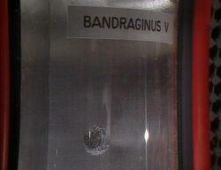 Bandraginus V.jpg