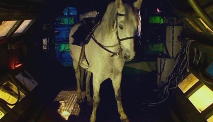 Arthur horse