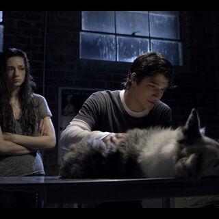 Scott Helping the Dog Allison Hit