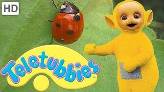 Teletubbies Ladybirds (Beetles) - Full Episode