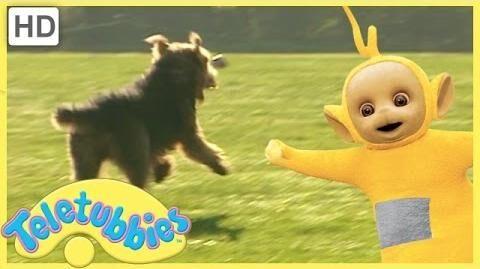 Teletubbies Full Episodes - Our Dog Alice (Season 7, Episode 157)