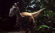 Raptor4