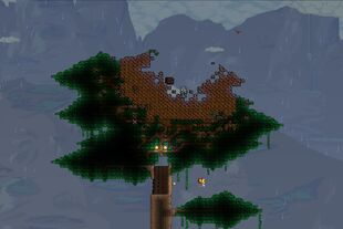Meteor tree