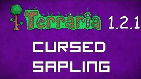 Cursed Sapling