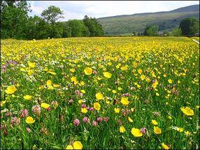 Bonum Meadow
