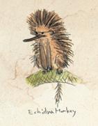 EchidnaMonkey