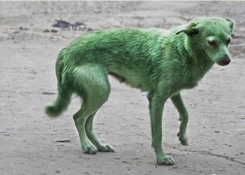 User blog:The shy platypi/Made up dog breeds Part 1 ...