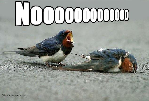 File:Birds noooo.jpg