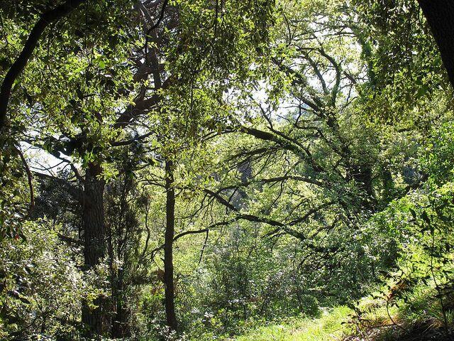 File:Forest Mediterranean bush green.jpg