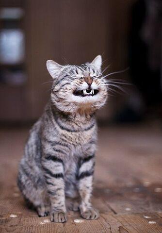 File:Kittens!!.jpg
