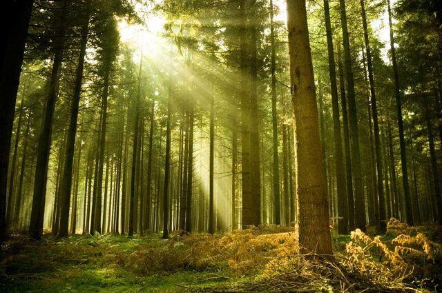 File:Forest .jpg