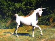 Unicorn Mutt