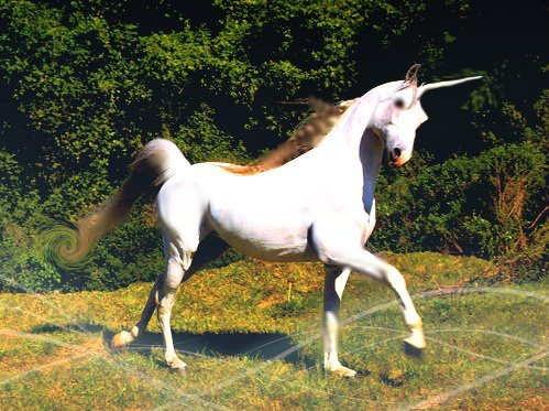 File:Unicorn Mutt.jpg
