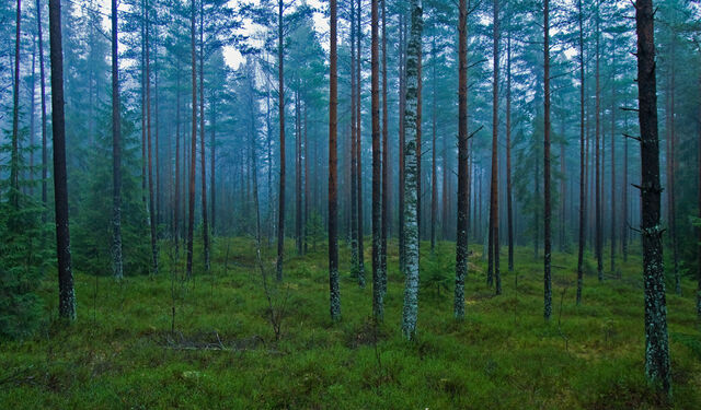 File:Forest-3.jpg