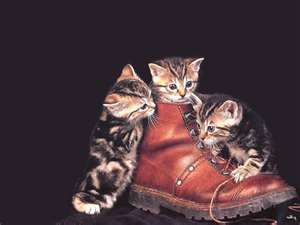 File:Boots.jpeg