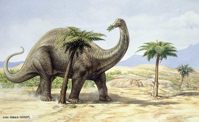 File:Apatosaurus 1.jpg
