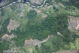 File:Forest2.jpg