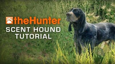 Dog tutorial - Scent Hounds