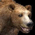 Brown bear male gold v1
