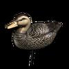 Decoy american black duck male
