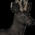 Roe deer male melanistic