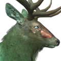 Rocky mountain elk male ghost