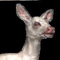 Roe deer female albino