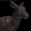 Red deer female melanistic