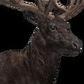 Red deer male melanistic