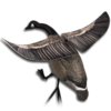 Decoy canada goose flapping wings