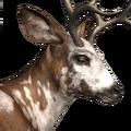 Blacktail deer male piebald
