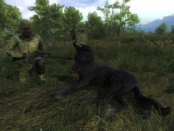 Destuy 57 melanistic coyote