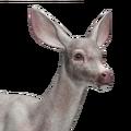 Mule deer female albino